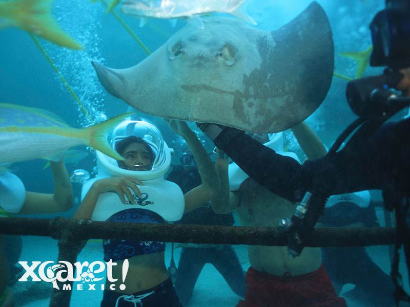 Sea Trek Stingrays3