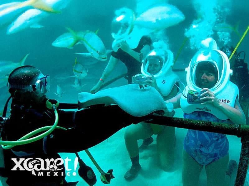 Sea Trek Stingrays4