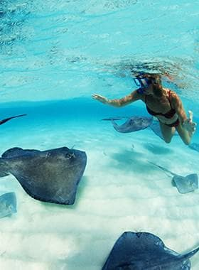 Stingrays Encounter