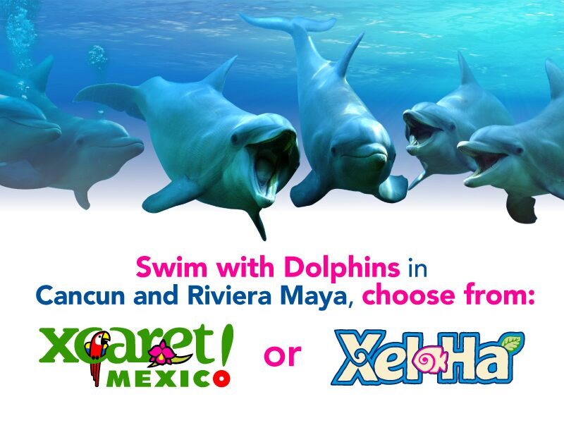 Live the greatest and most amazing dolphin swim experience in one of the most beautiful parks in Riviera Maya, and save more.